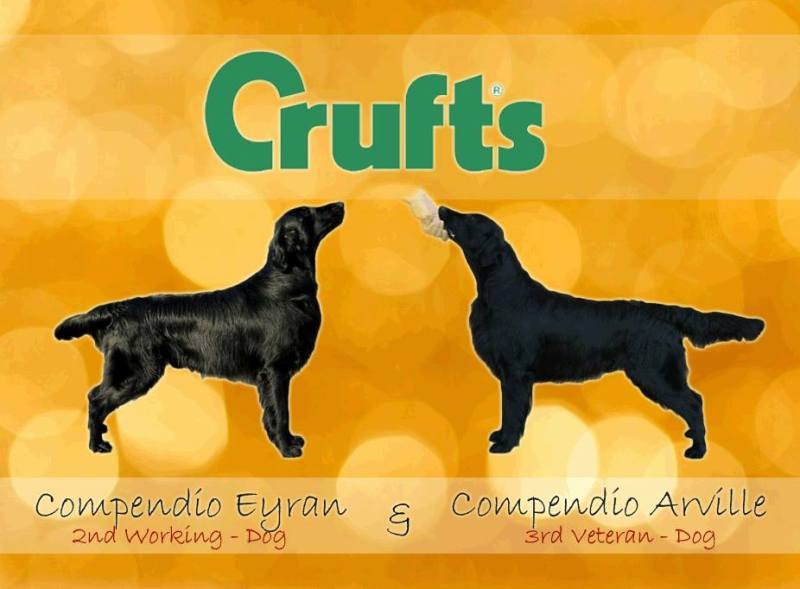 Crufts Martyna