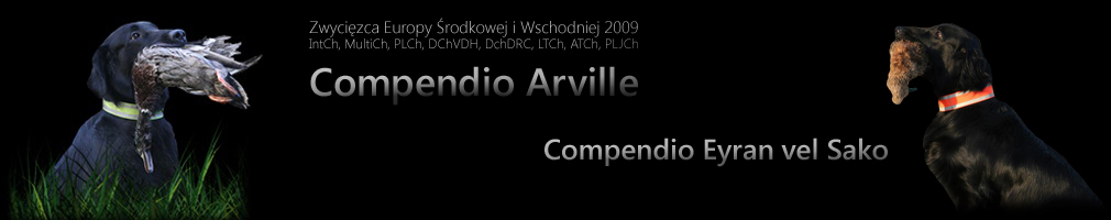 Flat Coated Retriever - Compendio Arville